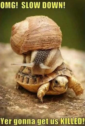 meme kura-kura dan siput