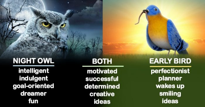 Early Bird vs Night Owl